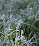 White hoarfrost on green grass Stock Photo