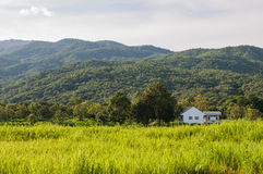 White home in grass field. And mountain Royalty Free Stock Photo