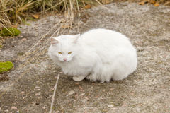 White homeless cat on trail Stock Photo