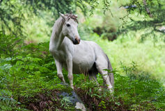 White horse. Standing in a forest Royalty Free Stock Images