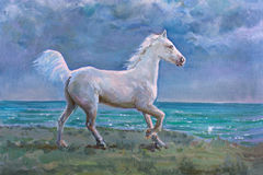 White horse. Galloping on shore, painting Stock Photos