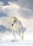 White horse. In snow under dramatic sky Stock Photo