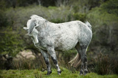 White horse. Very nice, white horse on meadow, nicly edited Stock Photos