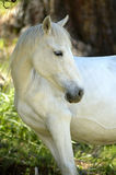White horse. (mare stock images