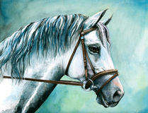 White horse. Portrait of white horse with harness watercolor painted.Picture I have created myself Stock Photos