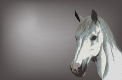White horse stock photography