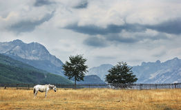 White horse in Albanian Alps. Stock Photo