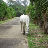 Horse in driveway grazing Stock Photo