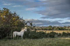White horse alone in the middle of the field. stock photo