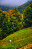 White horse at autumn mountain hill Royalty Free Stock Photo
