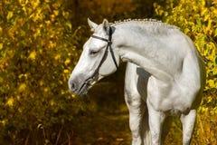 White horse in autumn park Royalty Free Stock Photos
