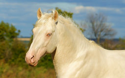 White horse on a background of cloudy sky Royalty Free Stock Image