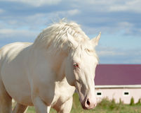 White horse on a background of cloudy sky Stock Photos