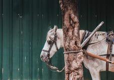White Horse behind tree Stock Photo