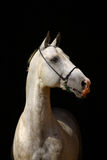 White horse on black Royalty Free Stock Photography
