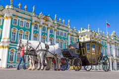 White horse and black carriage Stock Images