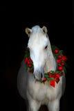 White horse on black Royalty Free Stock Photo