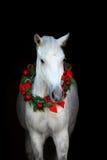 White horse on black Royalty Free Stock Photography