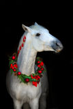 White horse on black Royalty Free Stock Photos