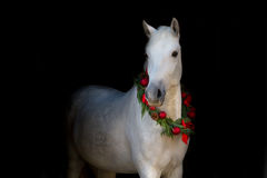 White horse on black Stock Photo