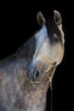 White horse on black Stock Images