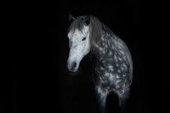 White horse on black Royalty Free Stock Images