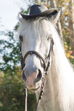 White horse in a black hat Royalty Free Stock Images