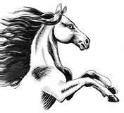 White horse with a black mane. Ink black and white illustration of a beautiful horse with a long black mane Stock Images