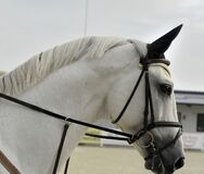 White Horse in Bridle Stock Photos