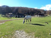 White horse in a bucolic landscape. White horse with dark points in a bucolic landscape with green meadows and a blue sky. This magnificent place is in Italy stock photography
