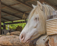 white horse in cage Royalty Free Stock Photos