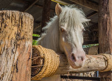 white horse in cage Stock Photo