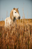 White horse of Camargue. Verticallyin the countryside Stock Images