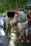 White horse with the carriage. Royalty Free Stock Photo
