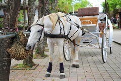 White horse with carriage Stock Images