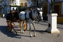 White horse carriage. Royalty Free Stock Photos
