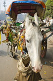 White horse and carriage in Agra, India Stock Photo