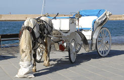 White horse and carriage. Royalty Free Stock Image