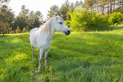 White Horse. Is chilling in the forest Stock Photos