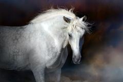 White horse in clouds of dust Royalty Free Stock Photo