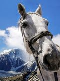 A white horse, cloudy blue sky and mountains landscape. A white horse, cloudy blue sky and Caucasus mountains peaks landscape Stock Photo