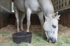 White Horse Stock Photos