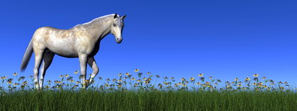 White horse - 3D render Royalty Free Stock Photo