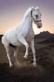 White horse in the desert Stock Photo