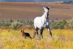 White horse with dog