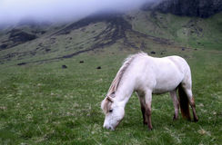 White Horse Eating Grass Near a Green and Black Rocky Formation With Fog Stock Photography
