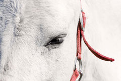 White horse eye. Beautiful close-up white horse eye Stock Photos