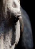 White Horse Eye. Close Up of White Horse's Eye with Black Background stock image
