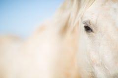 White horse eye Stock Photography