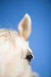 White horse eye Stock Photo